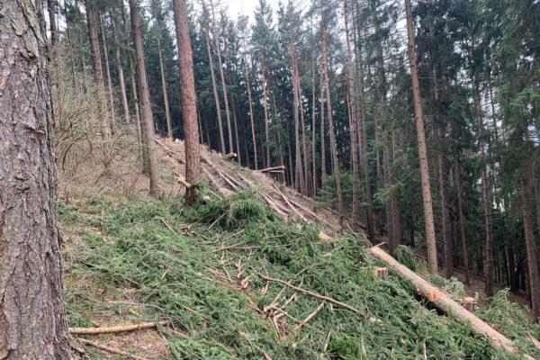 Zarfl Erdbewegungen Arling Wolfsberg Erdbau (24)